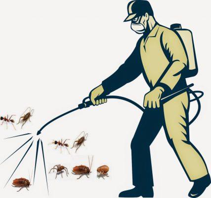 Dịch vụ diệt rệp giường tận gốc tại nhà
