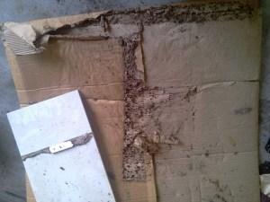 Sử dụng bìa cát tông